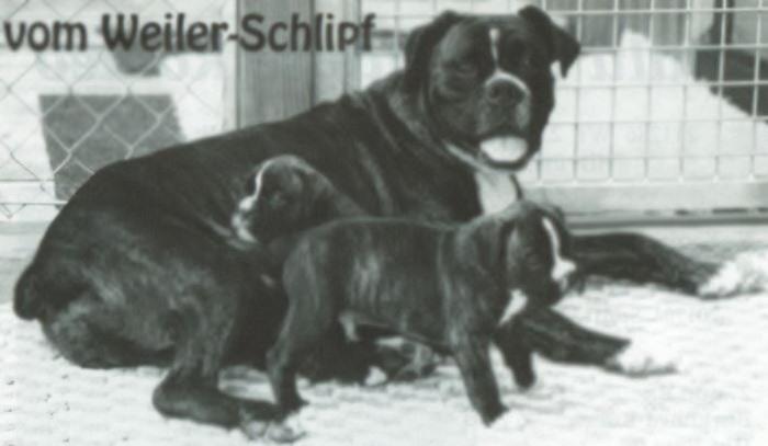 Emmelie v. Weiler Schlipf