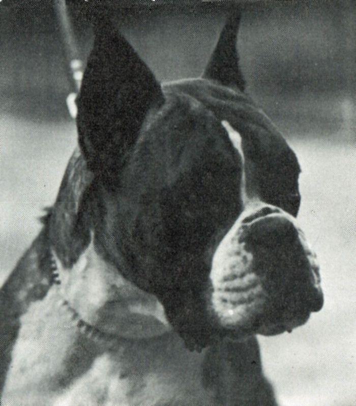 Irisca v.d. Hazenberg