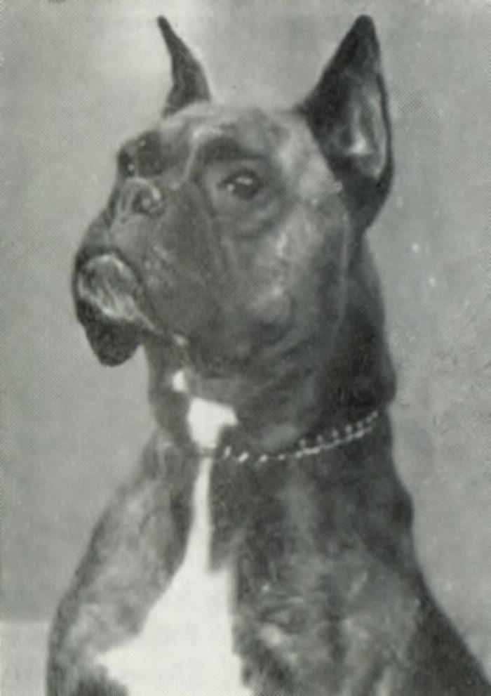 Comtess v. Dulbach