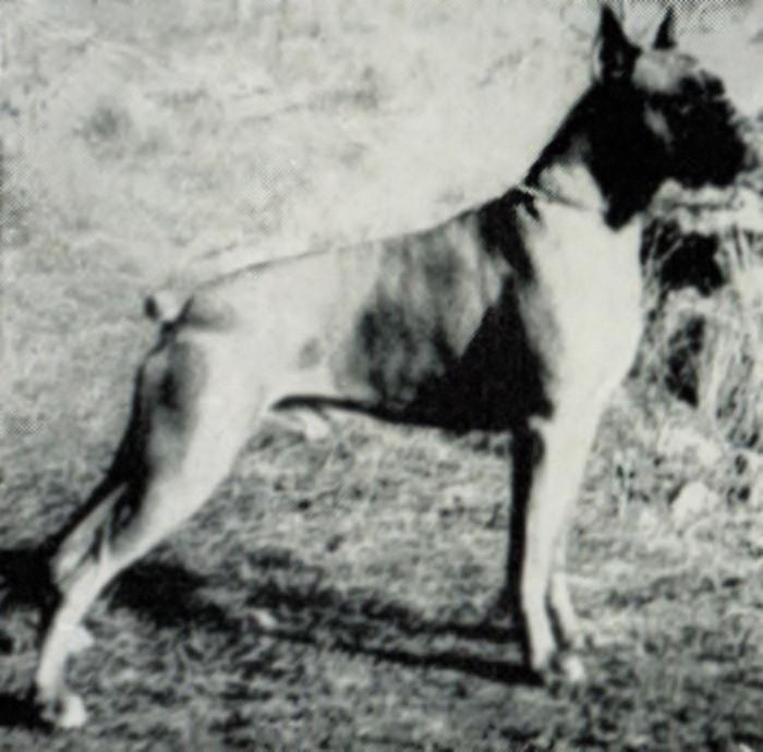 Roland v.d. Altenau