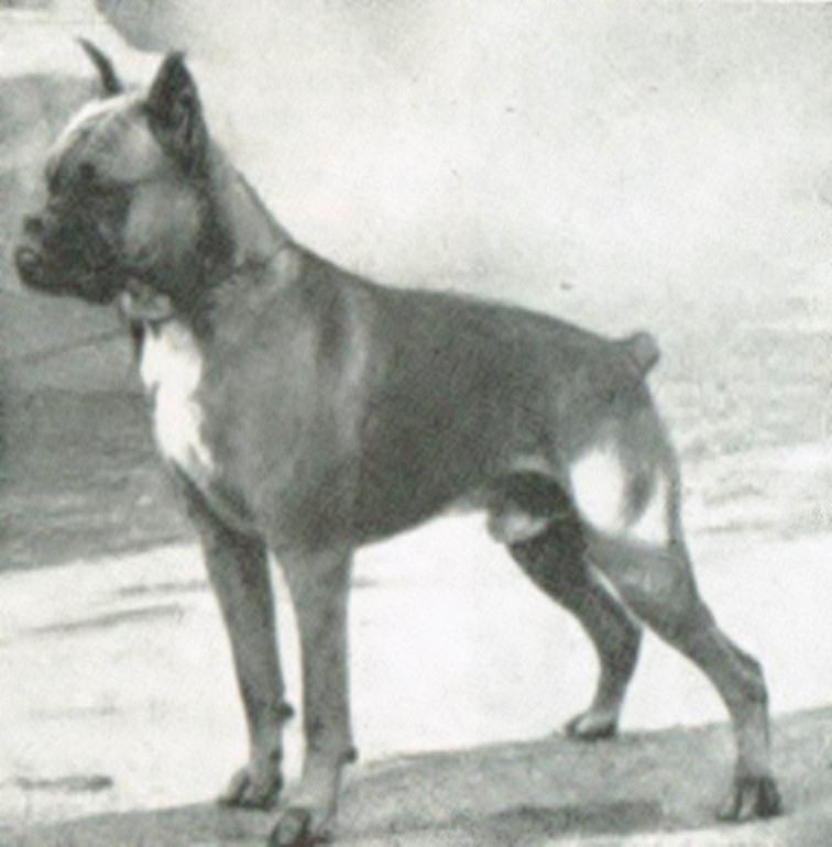 Pierol v. Rosenheim