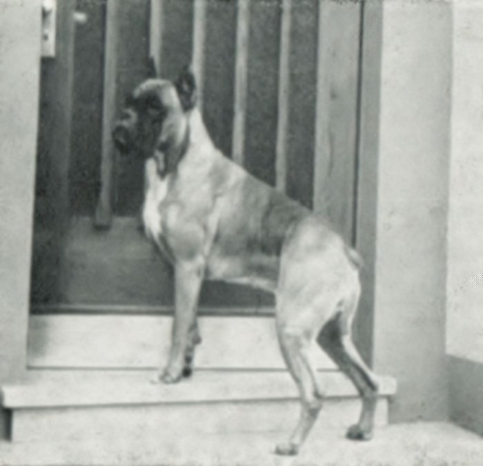 Ass-Baron v. Hause Dux