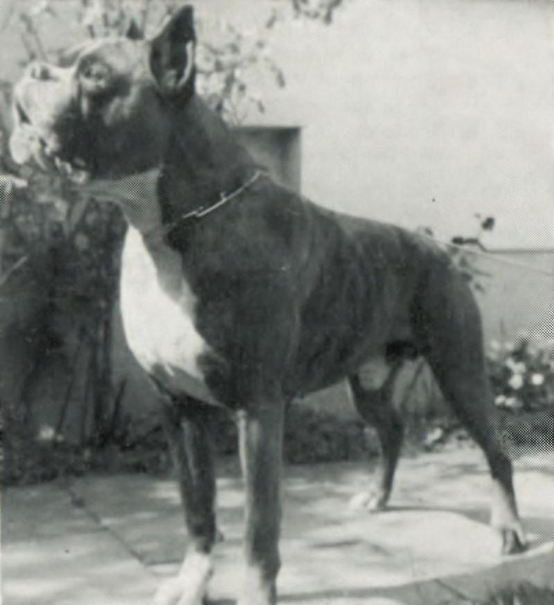 Elko v. Baierbrunn