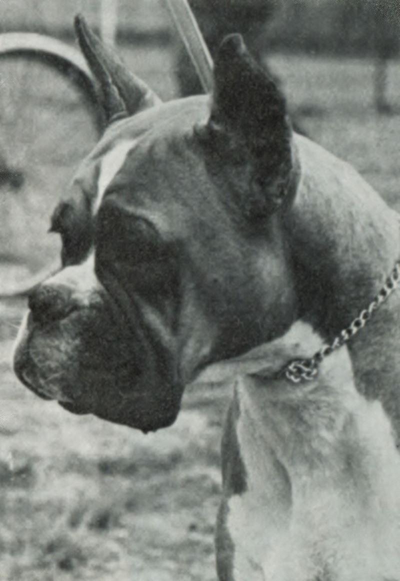 Freya v.d. Altenau