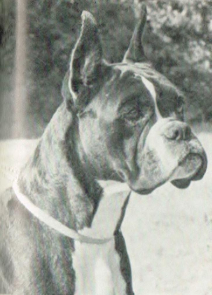 Vanja v.d. Boxerau