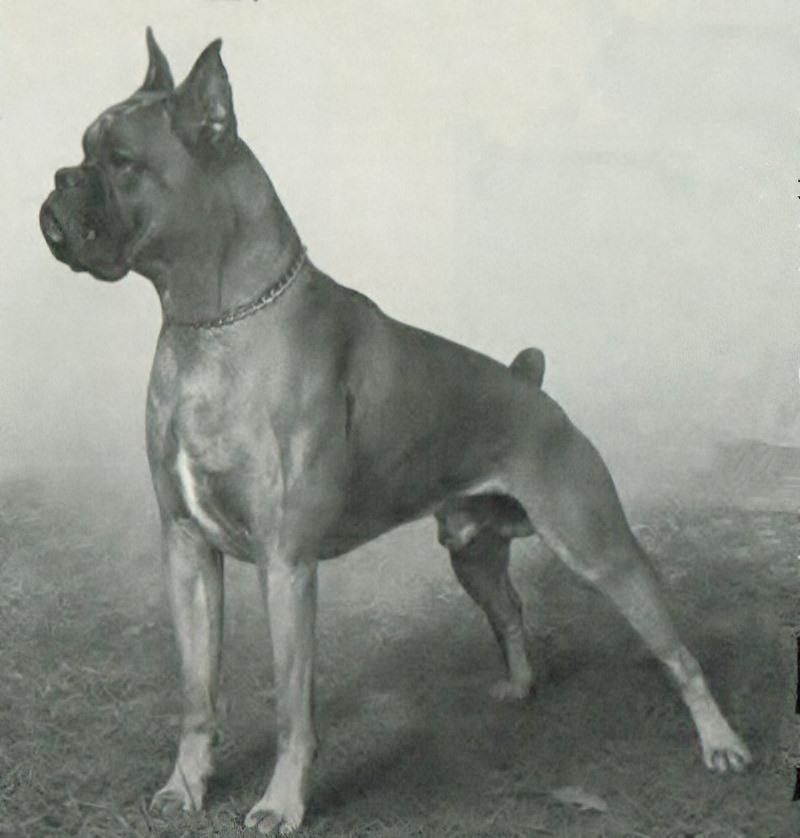 Boy v. Streifleskopf