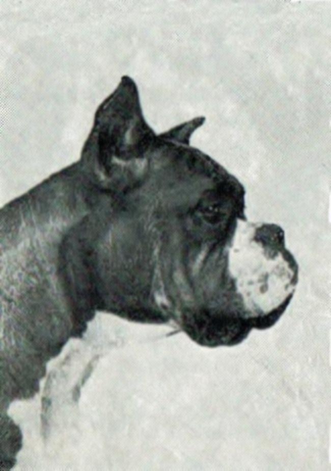 Baron v. Bonner Wappen