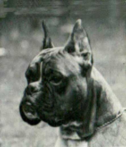 Stella v. Fernsehturm