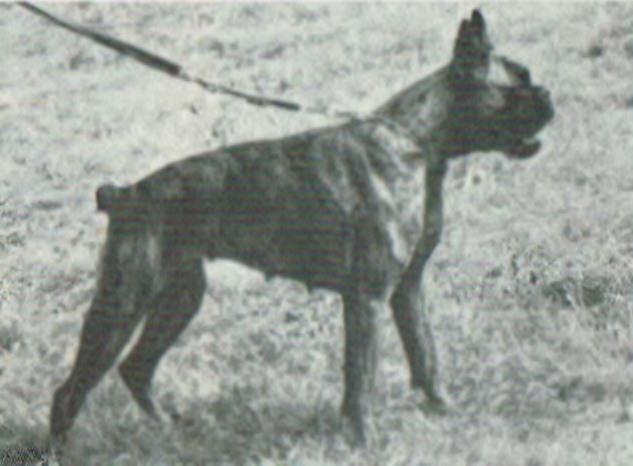 Fauna v.d. Breede