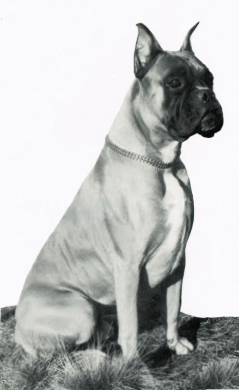 Dog v.  Drax