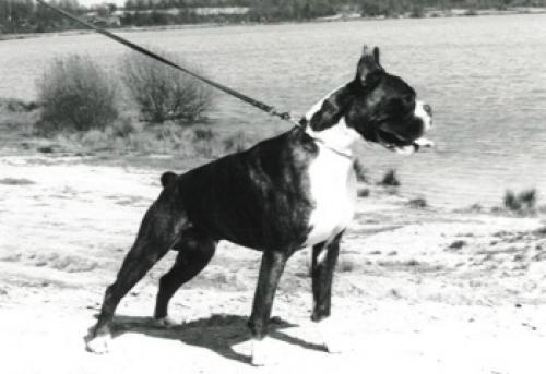 Lasko v.d. Hazenberg